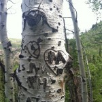 The Aspen Is A Lovers' Tree